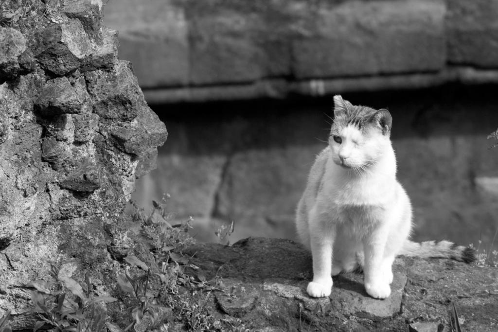 J Almon Polk - The Cat King